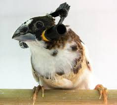 bird with headphones