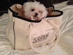 My Maltese dog Sazerac make me joyful